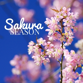 01 Sakura Season Instagram Post template