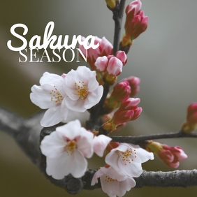 02 Sakura Season Instagram Post template