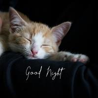 23 Good Night Message Instagram template