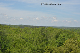 Above the trees 5