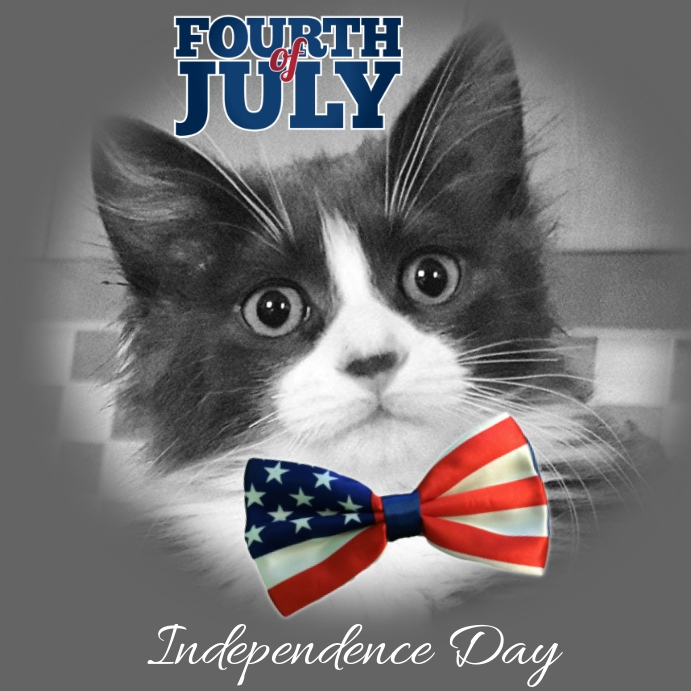 4th of July Funny Cats Template | PosterMyWall