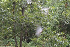 Webs on Tree