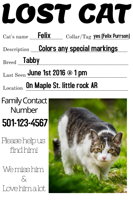 missing cat lost dog template