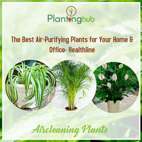 Aircleaning Plants