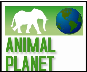ANIMAL PLANET TEMPLATE. Persegi Panjang Sedang