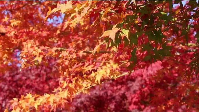 Autumn fall and beautifull tree YouTube-thumbnail template