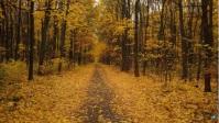 autumn fall and beautifull trees YouTube Thumbnail template