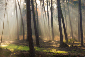Autumn forest sun rays