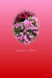 Azaleas in Bloom customizable flyer