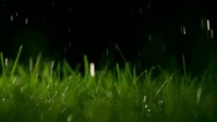 Beautiful raining in grass video Gambar Mini YouTube template