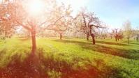 Beautifull tree and spring break video template
