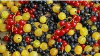 berry Miniatura di YouTube template