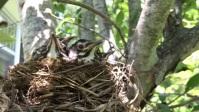 Bird Nest YouTube Thumbnail template