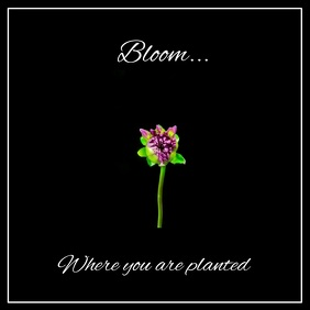 Bloom - Digital Message