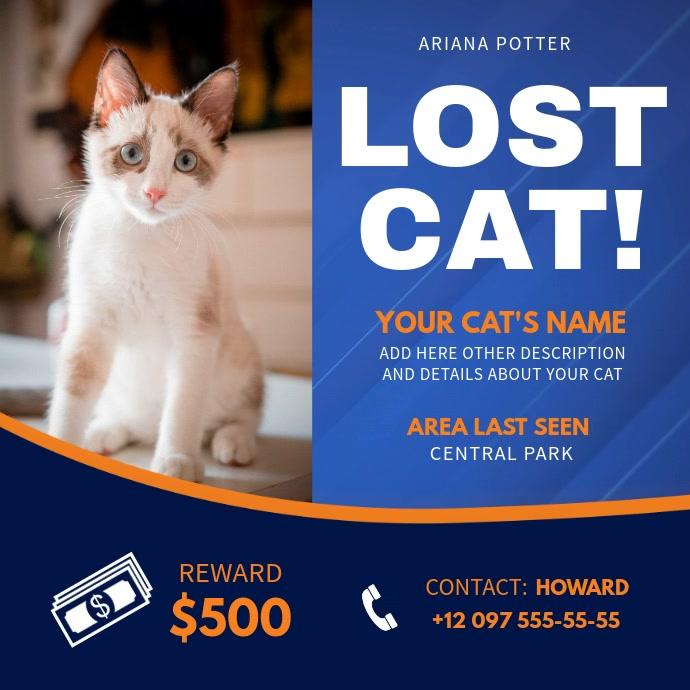 Blue Lost Cat Instagram Video