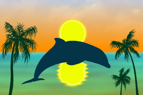 bottlenose dolphin jumping - palm trees and sunset