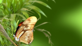 Butterfly Zoom Meeting Background