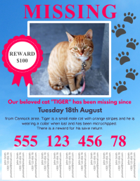 missing cat flyer template