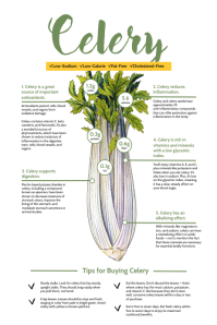 Celery Vegetable Facts Infographic Template