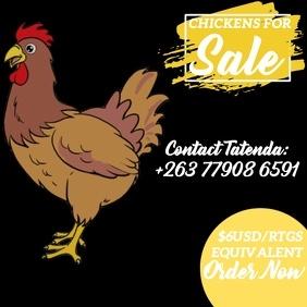 chicken flyer template