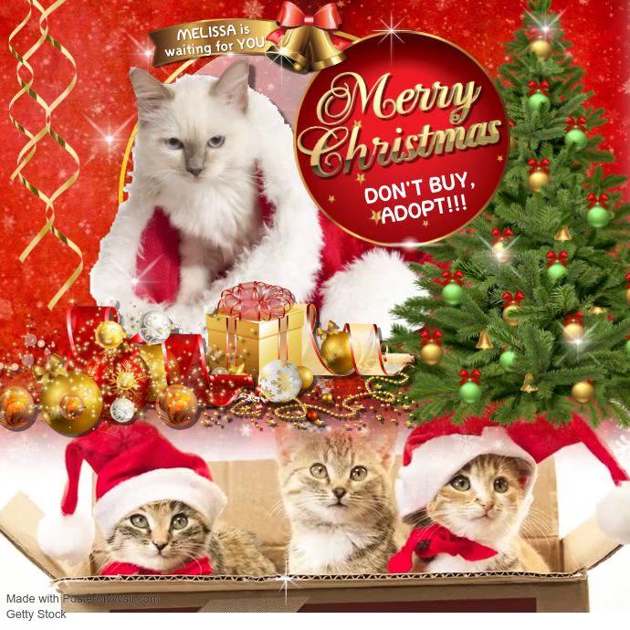 christmas adopt1