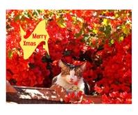 Christmas Greetings Mellemstort rektangel template