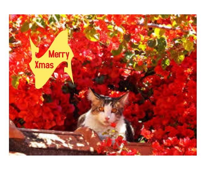 Christmas Greetings Persegi Panjang Sedang template