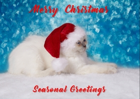Christmas Postcard Poskaart template