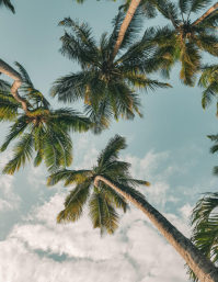 coconut tree background template ใบปลิว (US Letter)