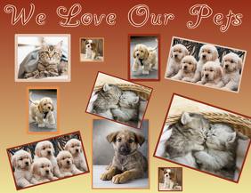Collage Dogs Cats Family