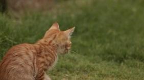cut cats งานแสดงผลงานแบบดิจิทัล (16:9) template