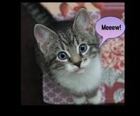 Cute Cat Medium Rectangle template