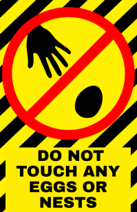 do not touch eggs or nests - warning attention alert sign