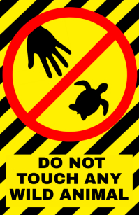 dont baby turtles - warning attention alert sign