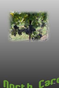 Vineyard Festival