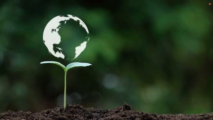 Earth and Tree Plants ตัวอย่างภาพบน YouTube template