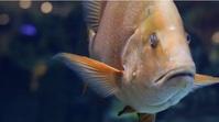 fish,water,chip Foto de Portada de Canal de YouTube template