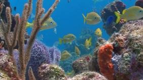 Fish aquarium virtual zoom background