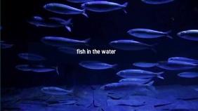 fish Digital na Display (16:9) template