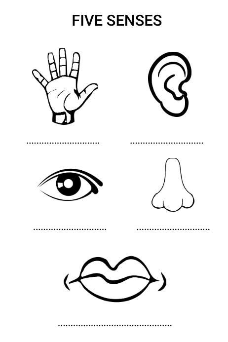 Five Senses Free Worksheet For Preschool Template PosterMyWall