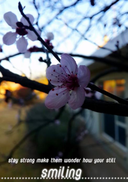 flower backrond