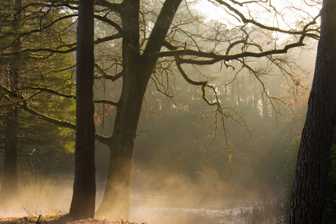forest sun rays and low fog template postermywall