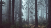 forest zoom background design template