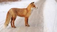 fox Miniatura de YouTube template