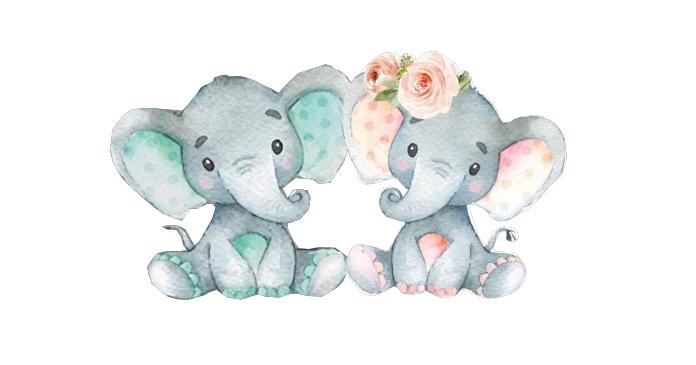 Gender Reveal elephant Facebook Shared Image template