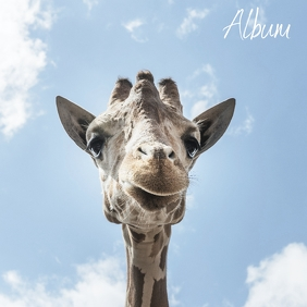 Giraffe album cover design