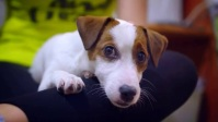 girl titillate the beautifull dog ตัวอย่างภาพบน YouTube template
