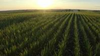Grain farming Miniatura na YouTube template