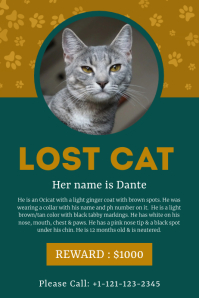 Grey Pet Cat Lost Help Post Template Poster