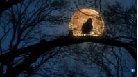 halloween flyer Miniatura de YouTube template